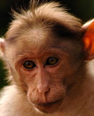 040316 monkeywheelchair 1