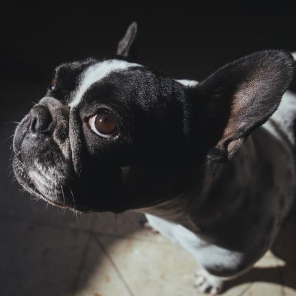 0600416 bulldog p