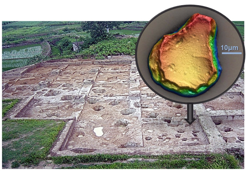 The Shangshan site and a rice bulliform phytolith used for dating and identification (inset).