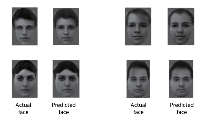 Four real faces that were presented to a monkey, together with reconstructions made by analyzing electrical activity from 205 neurons recorded while the monkey was viewing the faces.