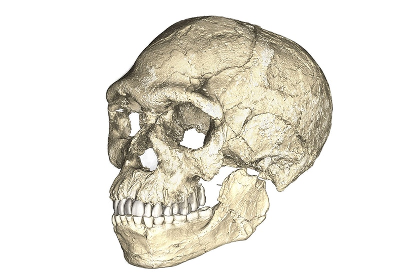 A composite reconstruction of the earliest known Homo sapiens fossils from Jebel Irhoud (Morocco) based on micro computed tomographic scans of multiple original fossils.