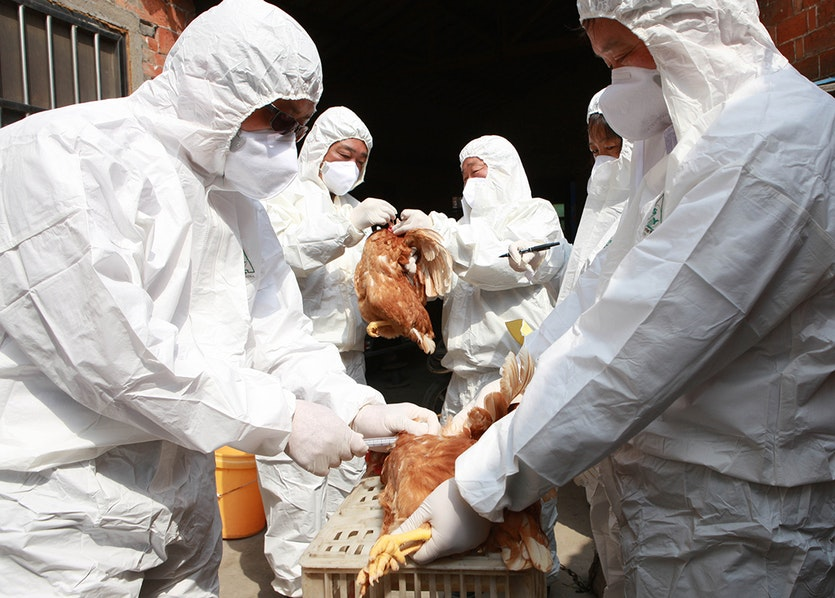 Scientists conduct blood tests on chickens after an outbreak of avian influenza in China.