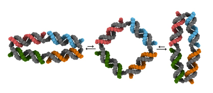 One of the DNA nanomachines and the shapes it can switch between.