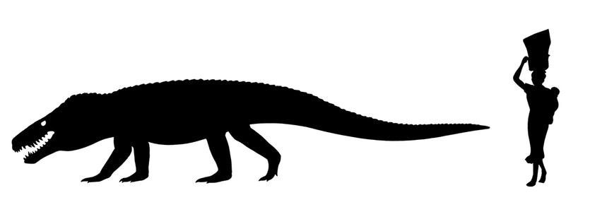 Razanandrongobe sakalavae with a human for scale.