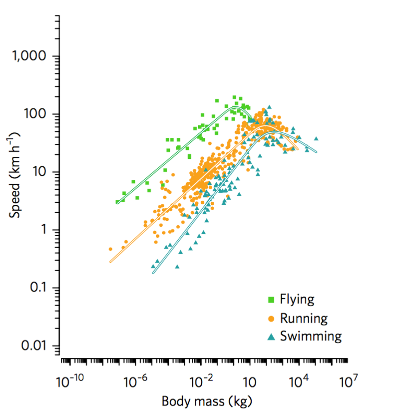 Graph showing top speed vs body mass for many flying, running and swimming animals.