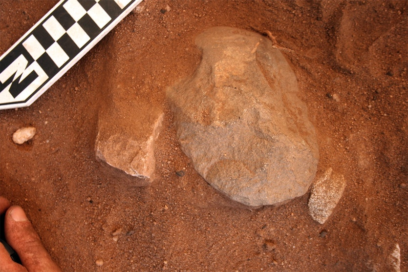An edge-ground hatchet head being excavated.