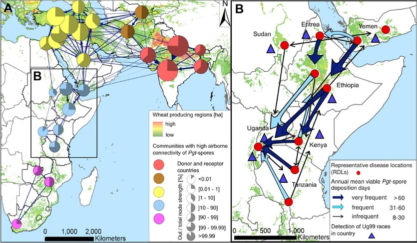 Maps of spore dispersal networks in Africa.