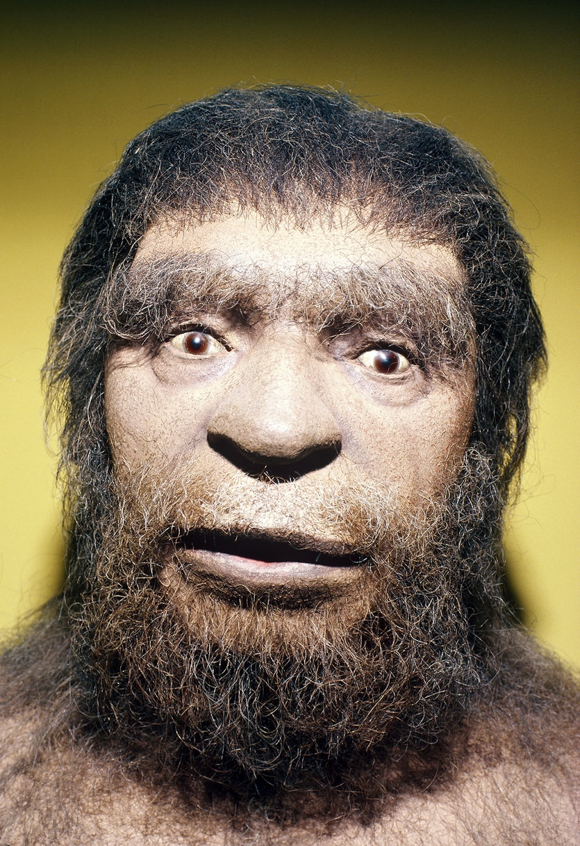 The genetic legacy of the Neanderthals lives on in modern humans.