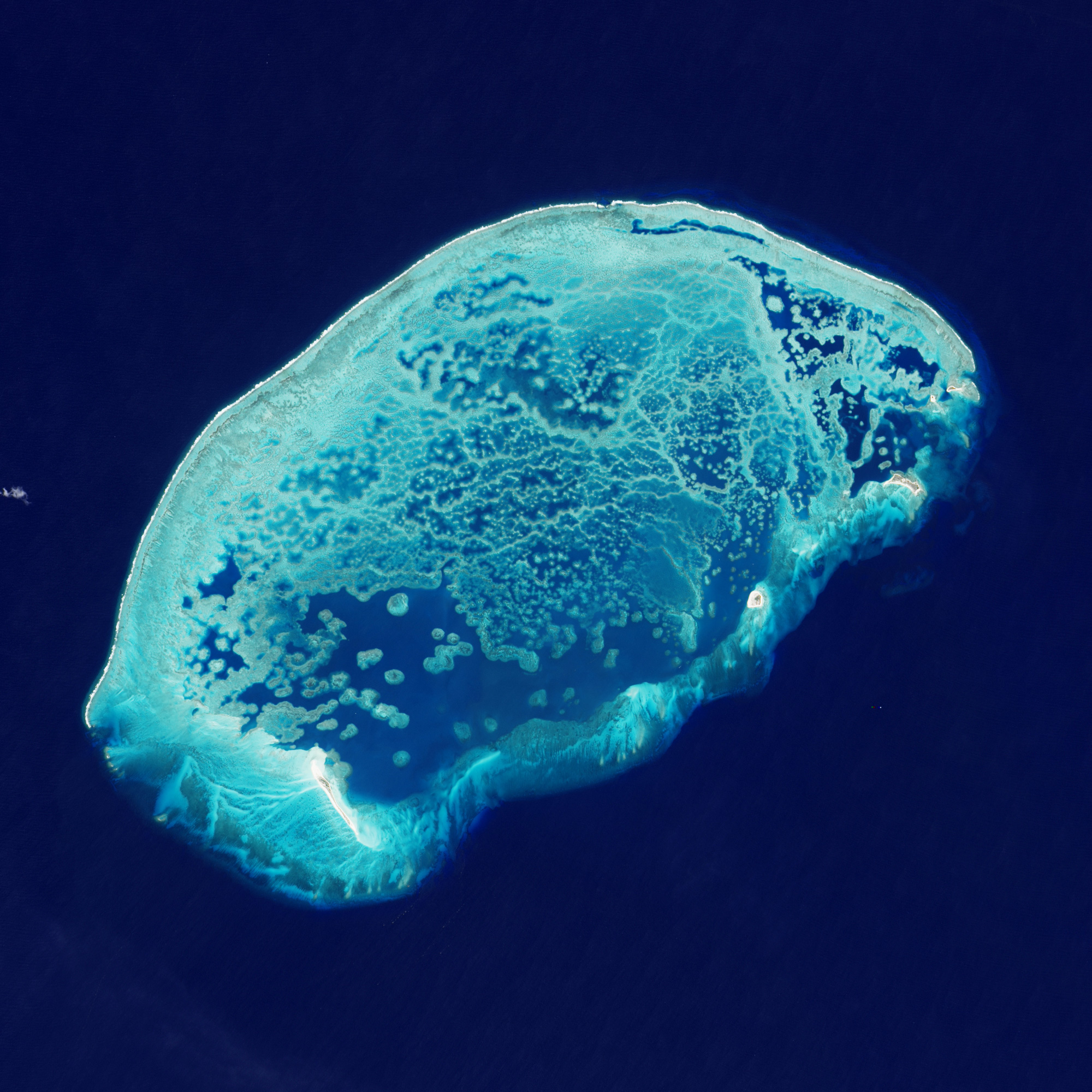 The Arrecife Alacranes, or Scorpion Reef, is the largest coral formation in the Gulf of Mexico.