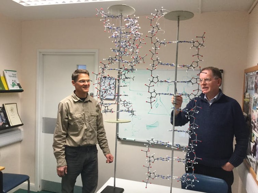 The author Stephen Harding (right) and Dr. Guy Channell compare Creeth's model for DNA with Crick and Watson's.