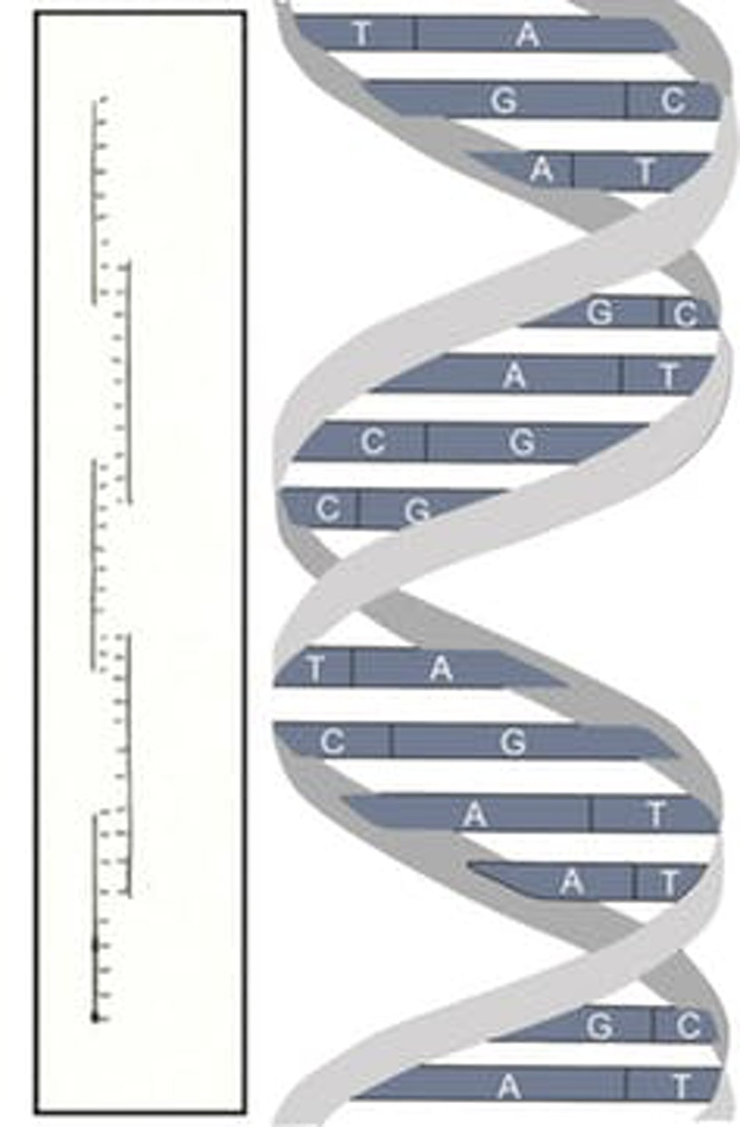 Creeth's DNA structure - from a drawing in his PhD Thesis - versus the actual one.