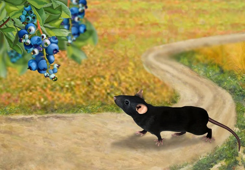 Imagining the world from a mouse's perspective is essential for international brain laboratory scientists when picking a lab task that mimics a real-world decision.