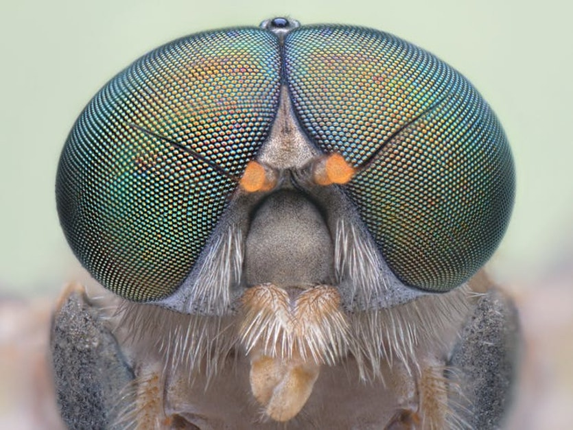 Flies have up to 6,000 mini lenses in each eye.