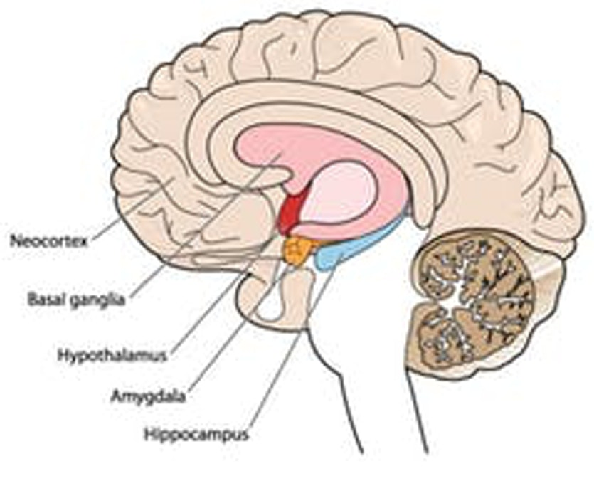 The hypothalamus works as the body's thermostat.