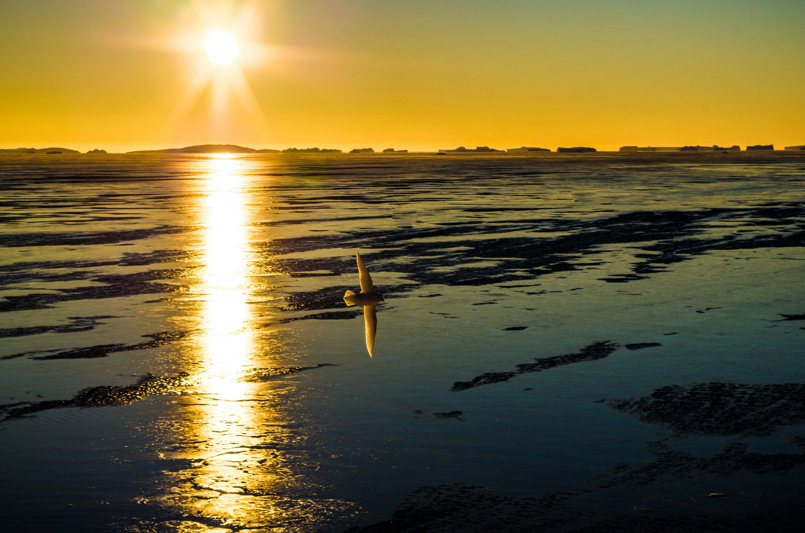 A low sun hangs over icy antarctic waters.