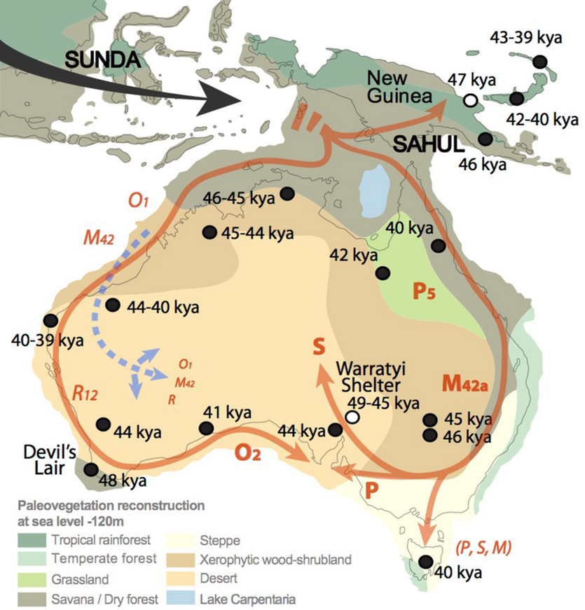 Map of the original colonisation of Australia showing different genetic markers carried by Aboriginal populations (in red), and the vegetation zones at the time. Archaeological dates are shown in black, with 1 kya = 1,000 years ago.