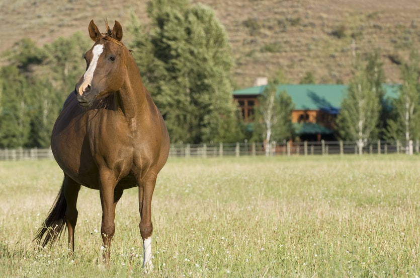 Thoroughbred foals that carry alive to full term can be worth more than a million dollars.