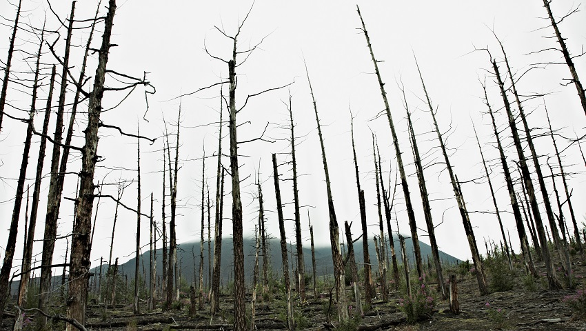 Increasing numbers of forests are dying from climate change and heat stress.
