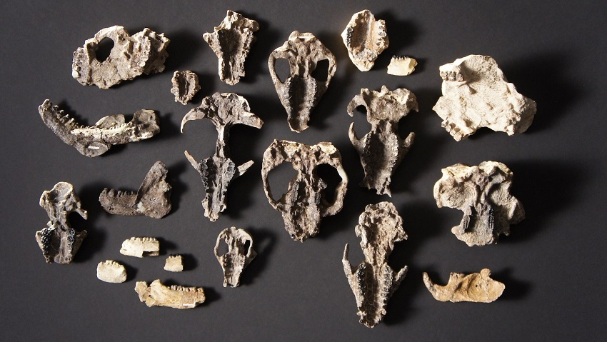 What to do if you find fossils or artefacts