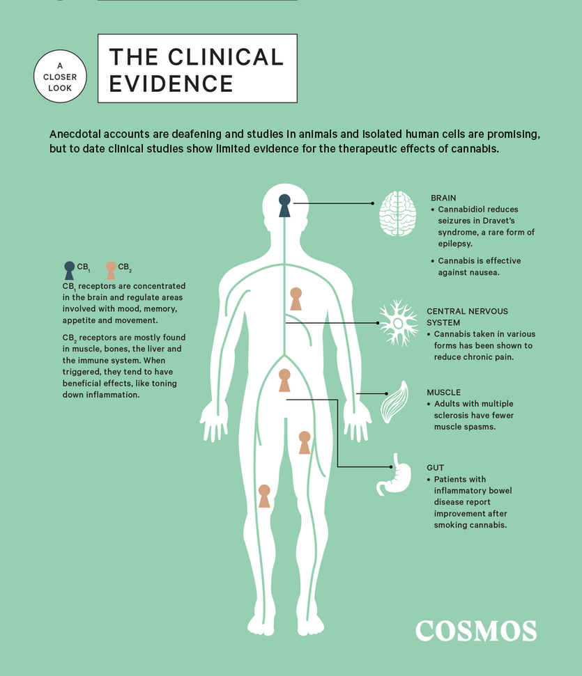 A closer look at the clinical evidence of medical cannabis.