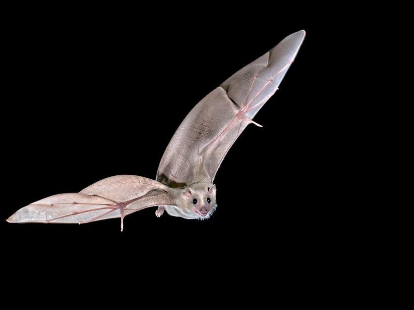 260117 bat 1
