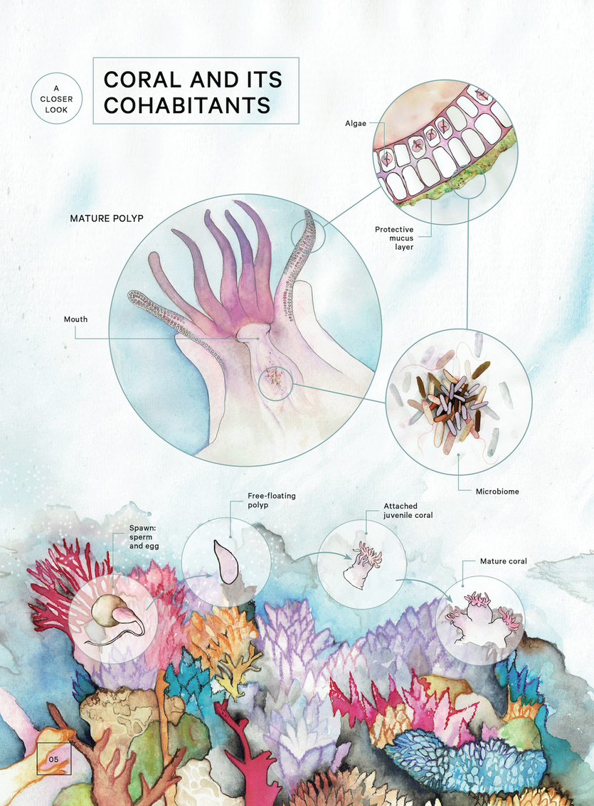 Infographic: A closer look at coral and its cohabitants.