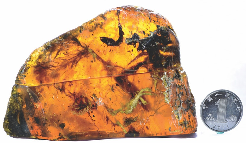 Barely three-and-a-half centimetres long, the preserved details of this Enantiornithes hatchling are extraordinary.