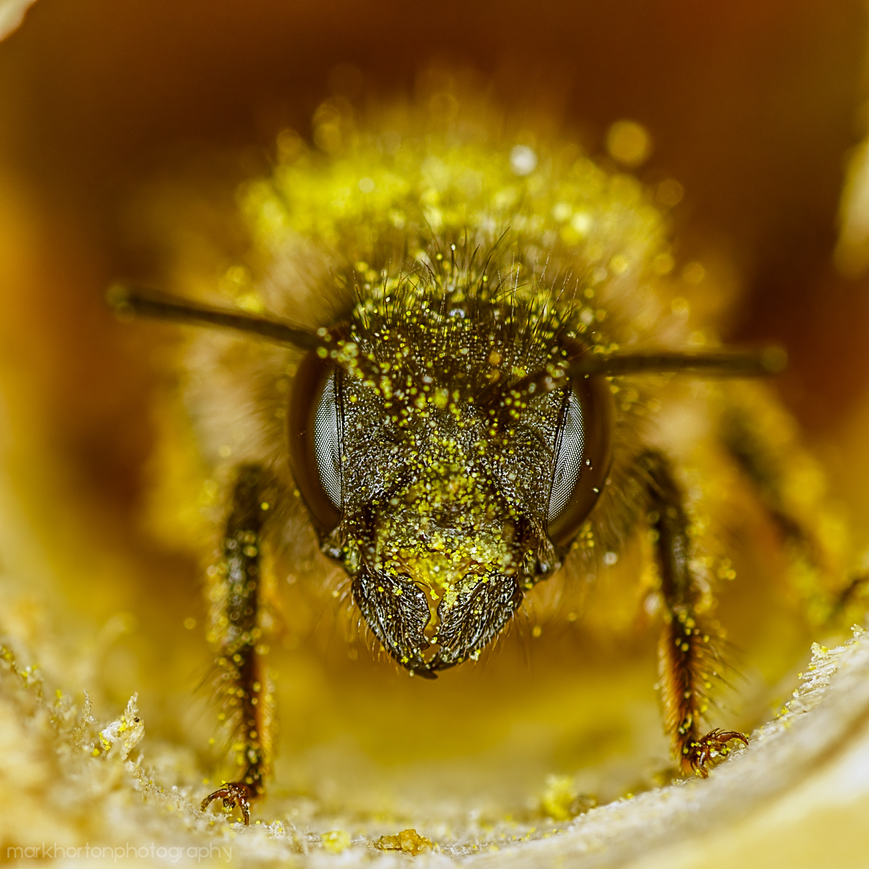 A bee who has just finished making some bee bread, which contains plant microRNA that will affect the development of the larvae who eat it.