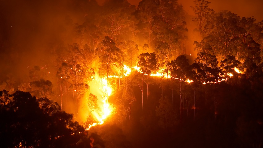 The new gel could provide long-term protection against the devastating effects of bushfires.