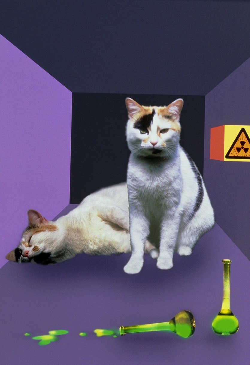 The right kind of interference might be able to tilt the odds in favour of Schrodinger's cat.