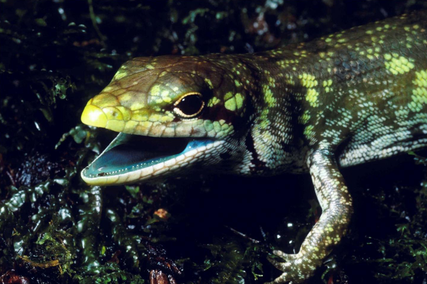 5 remarkable reptile facts herpetologists want you to know