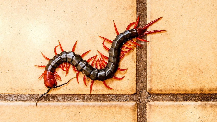 Centipedes would be awesome at triathlons if they could ride bikes.