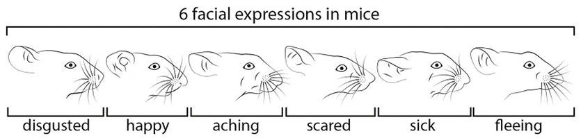 mice_facial expressions