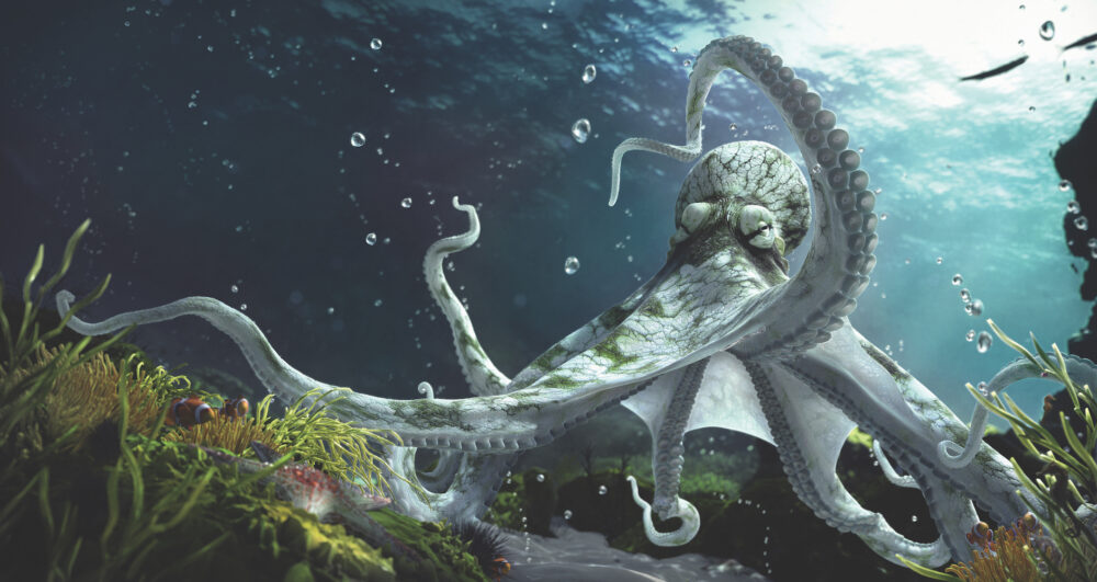 How the octopus got its smarts