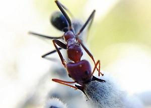 200611 Ant 1.