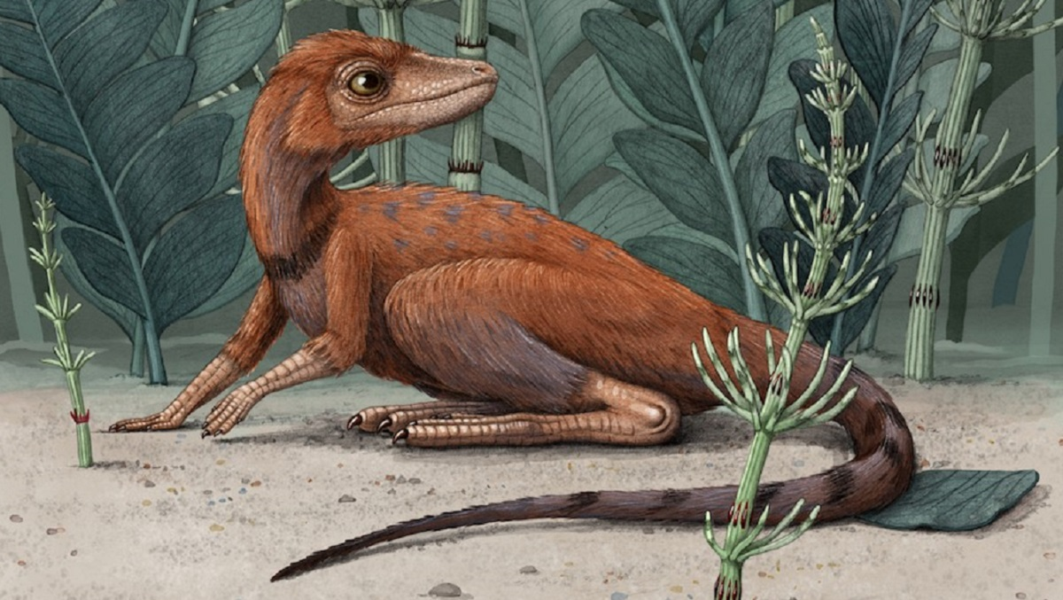 Scientists say the fossil of a small reptile related to dinosaurs and pterosaurs suggests some of the largest animals to live on Earth may have had ex