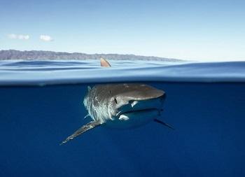 191001 shark nets shark ocean