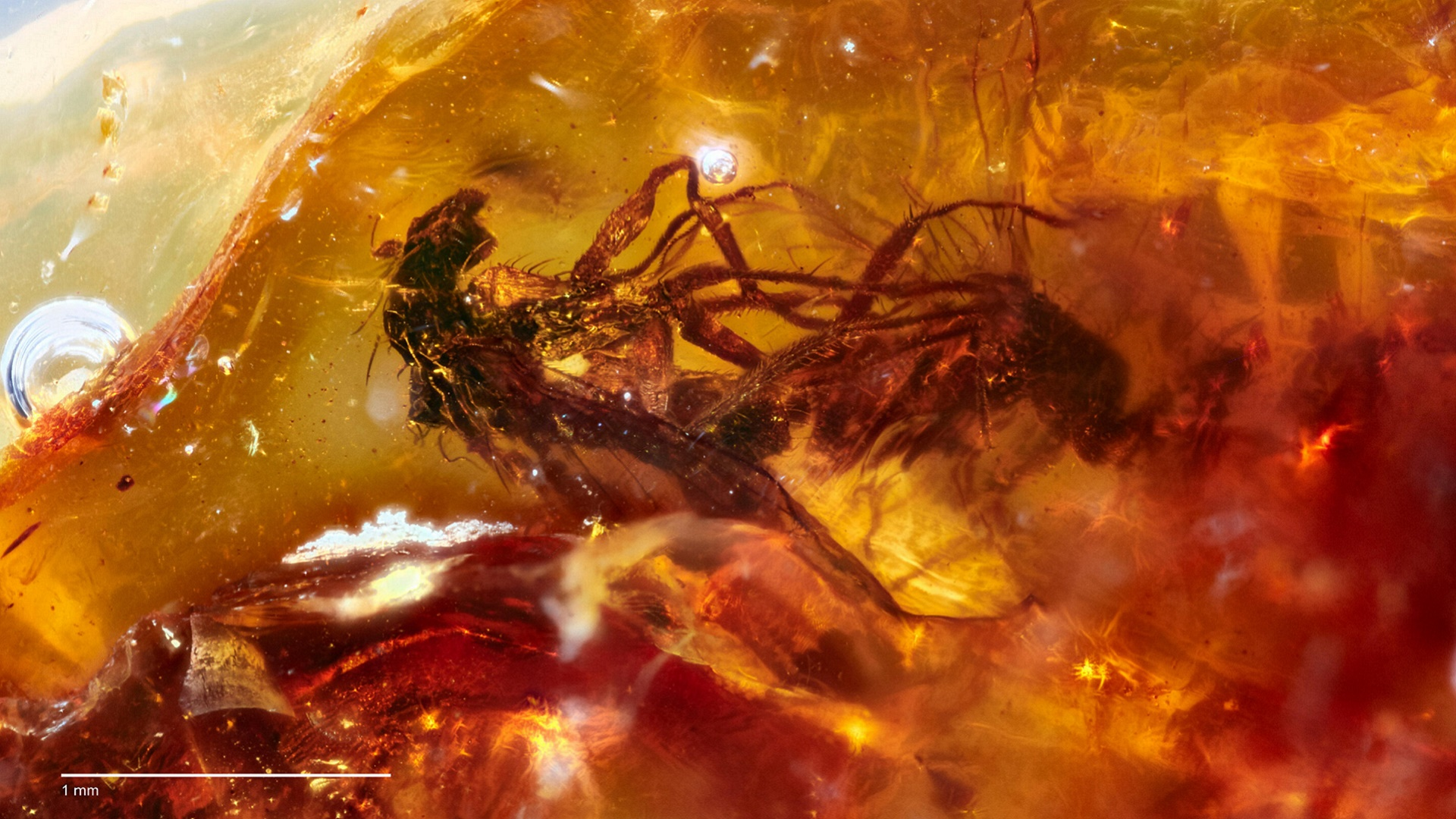 200408 prehistoric flies trapped in amber while rooting planet 2 fornicating flies credit jeffrey stilwell
