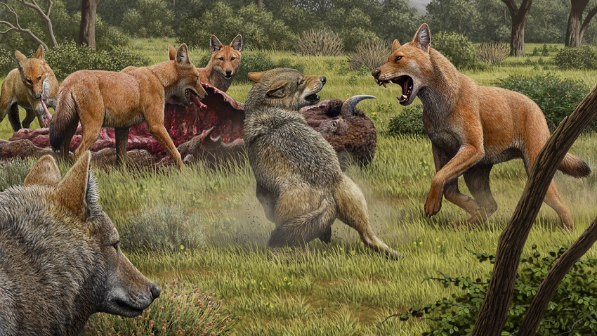 Ancient DNA Reveals Secrets of Dire Wolves