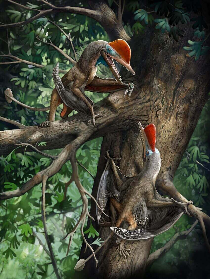 Artist's reconstruction of the monkeydactyl pterosaur with opposable thumbs.