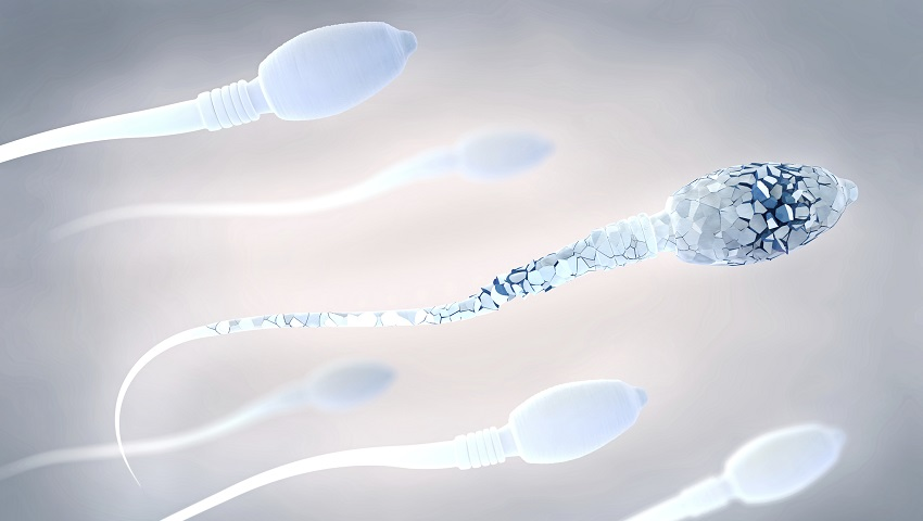 6 sperm. The sperm in the foreground has cracks in it