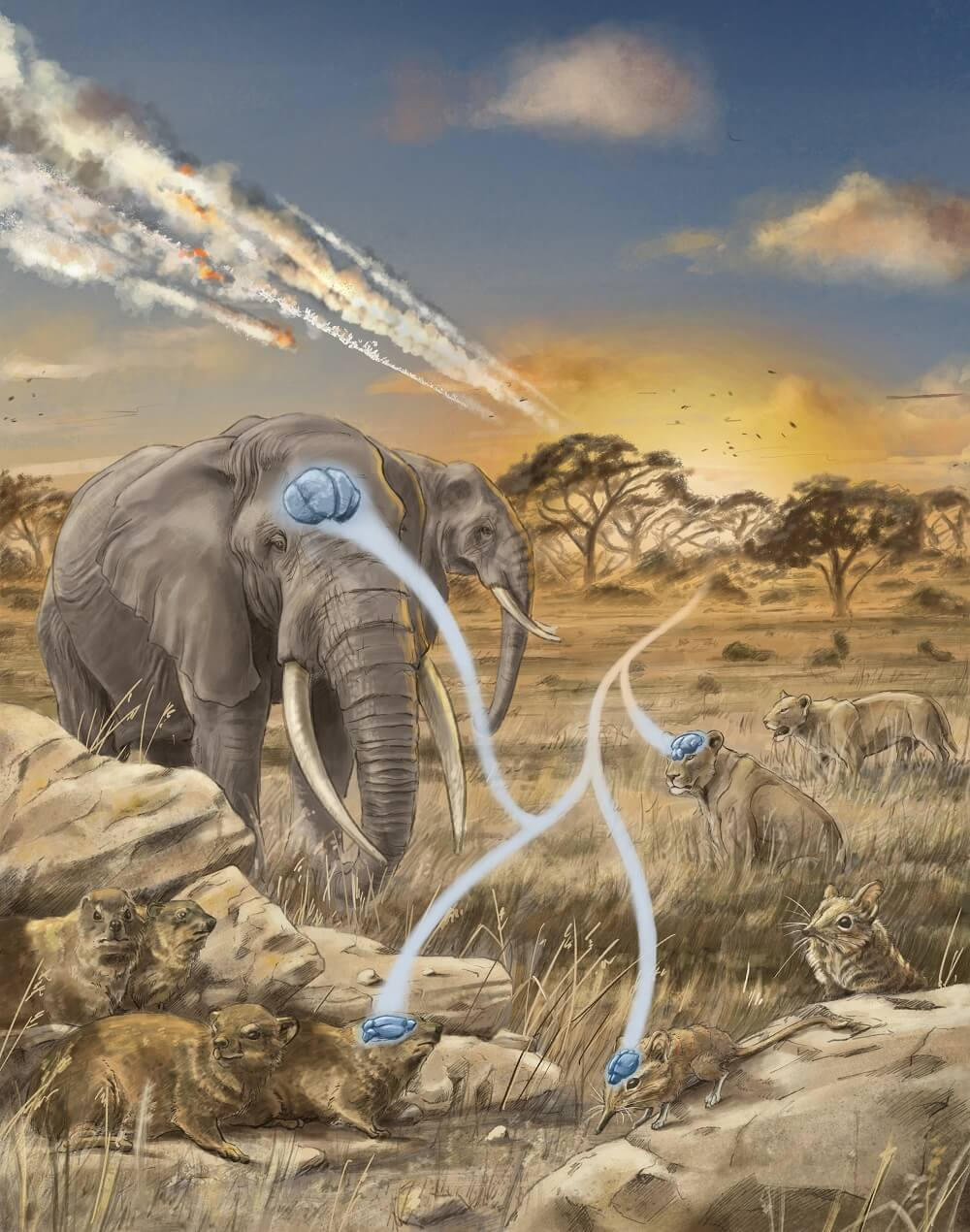 illustration of two elephants, two lions and a shrews. Blue brains are on their heads. The heads are connected by a white forked path