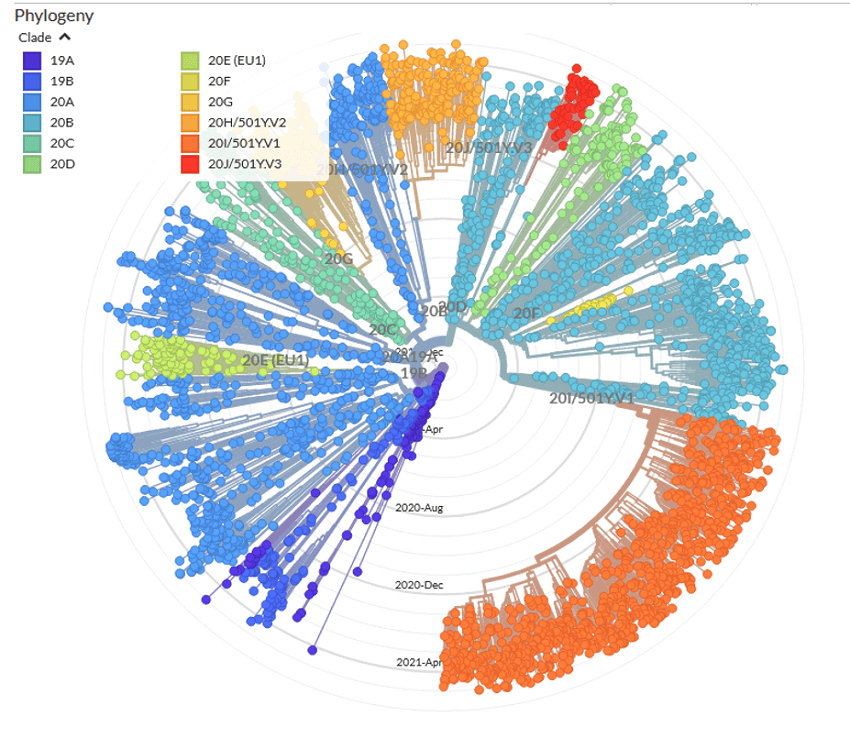 A phylogenetic tree showing different lineages of COVID-19. Each colour represents a different group of the virus, while each dot is a different strain.