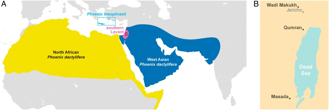 map of West Asian and Levant, with Judean date palm in pink