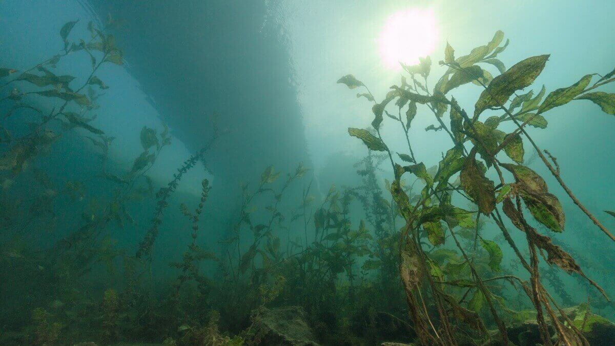 Oxygen declining in the world's lakes