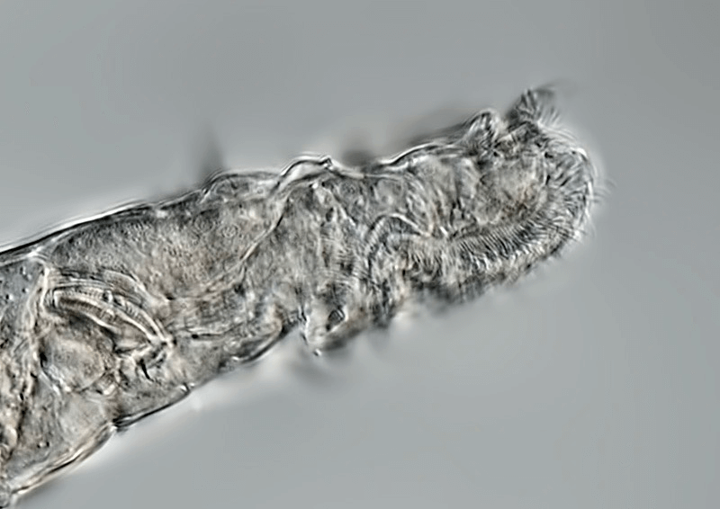 a close up of a worm-like creature. There is a lot of texture inside and out