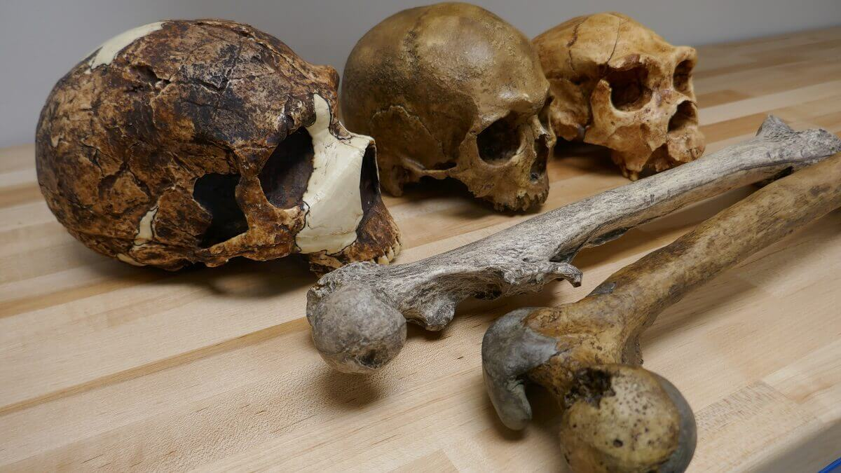 Ancient human body size linked to climate change