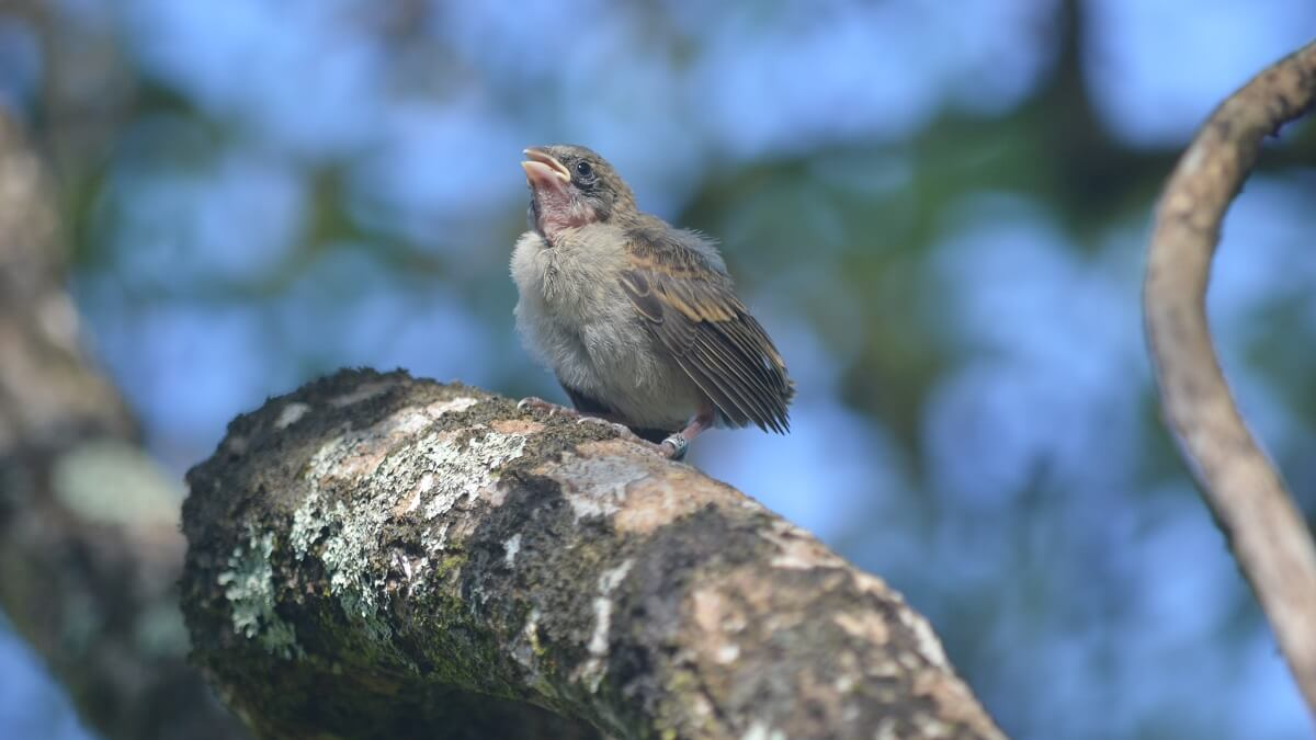More to learn about evolution from galápagos finches