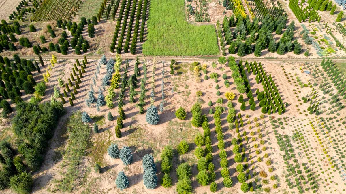 The uncomfortable balance between biodiversity and carbon capture