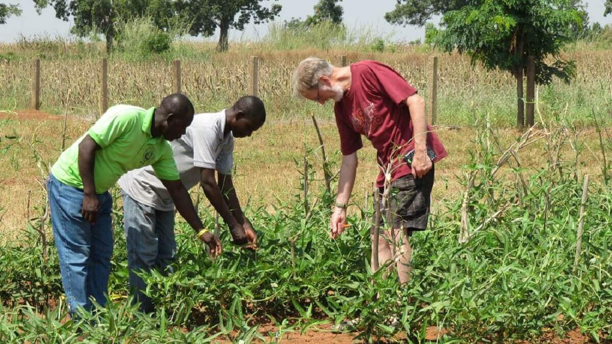Game-changing gm crop finally planted in nigeria